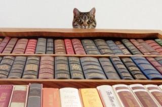 Оригінальні домашні бібліотеки «відомих книголюбів»
